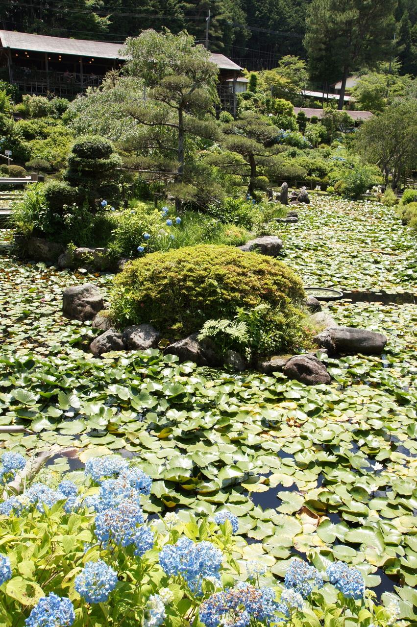 滝谷花しょうぶ園